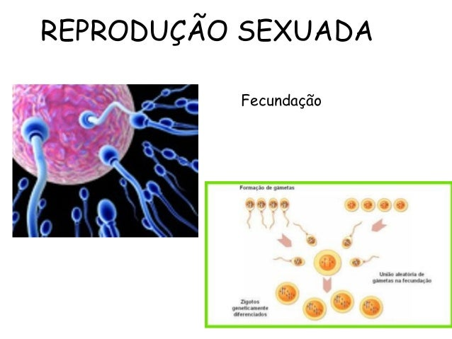 068f6133d71 REPRODUÇÃO SEXUADA Fecundação REPRODUÇÃO SEXUADA OU GÂMICA ...