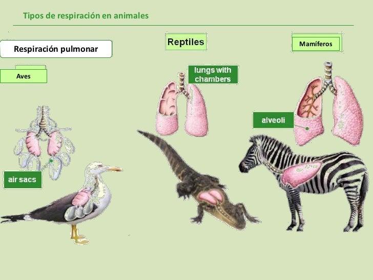 Tipos De Respiraci 243 N