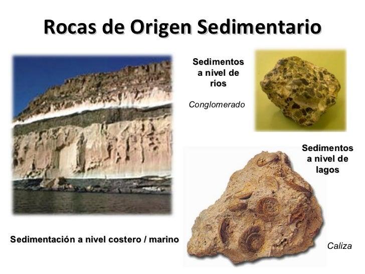 Los sedimentos comúnmentepermiten la fosilización…