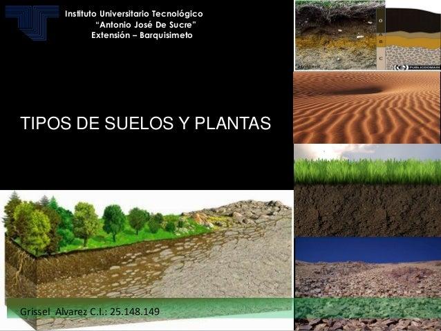Tipos de suelos - Tipos de suelos para casas ...