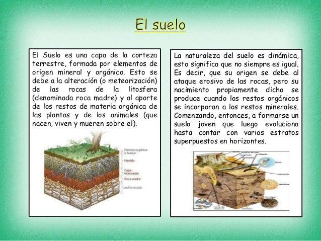 Tipos de suelos y plantas for Como estan formados los suelos