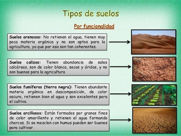 tipos de suelos y plantas