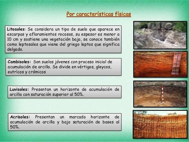 Tipos de suelos y plantas for A que se denomina suelo