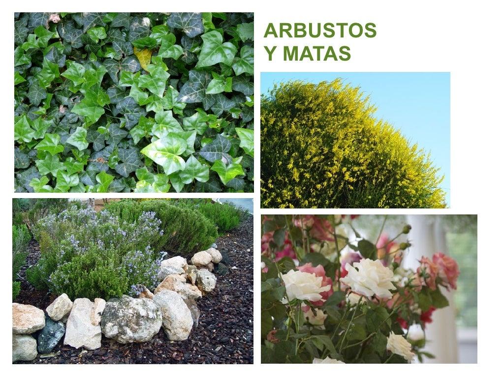 Tipos plantas seg n su tama o - Lista nombre arbustos ...