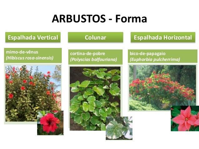 Tipos vegetais aplicados ao paisagismo - Clases de flores y sus nombres ...