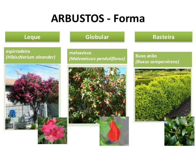 Tipos vegetais aplicados ao paisagismo - Nombres de arbustos ...