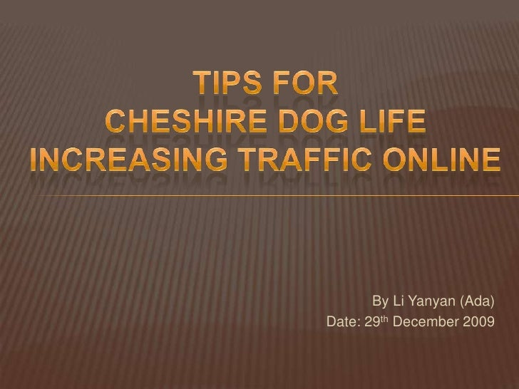 Tips for <br />Cheshire dog life <br />increasing traffic online<br />By Li Yanyan (Ada)<br />Date: 29th December 2009<br />