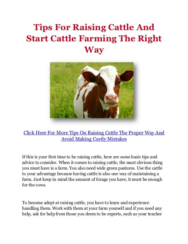 Tips For Raising Cattle And  Start Cattle Farming The Right                WayClick Here For More Tips On Raising Cattle T...