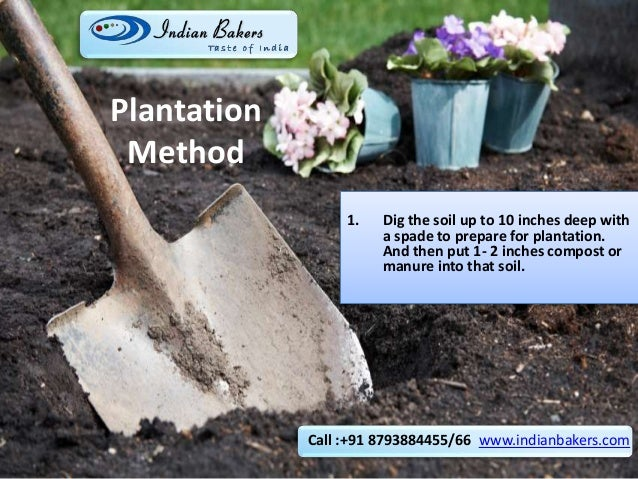 Plantation Method 1. Dig the soil up to 10 inches deep with a spade to prepare for plantation. And then put 1- 2 inches co...