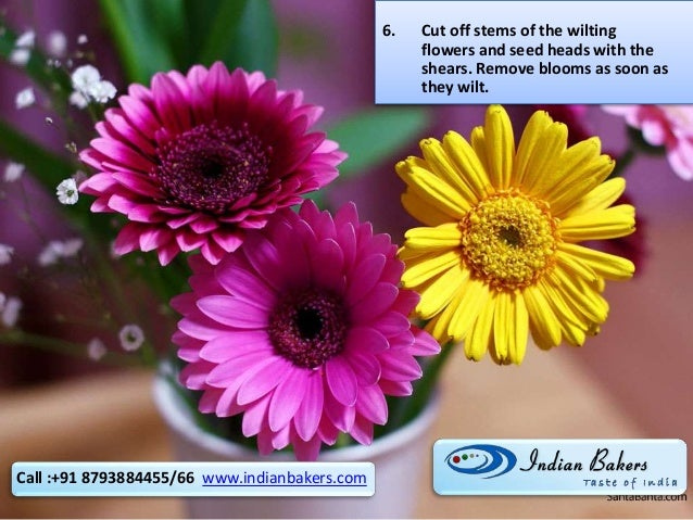 6. Cut off stems of the wilting flowers and seed heads with the shears. Remove blooms as soon as they wilt. Call :+91 8793...