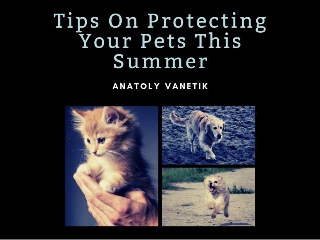 Tip On Protecting Your Pet This Summer