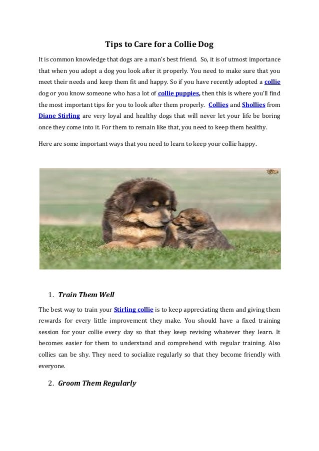 Tips to Care for a Collie Dog It is common knowledge that dogs are a man's best friend. So, it is of utmost importance tha...