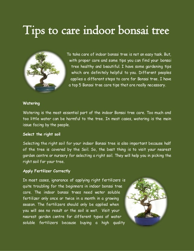 Tips to care indoor bonsai tree