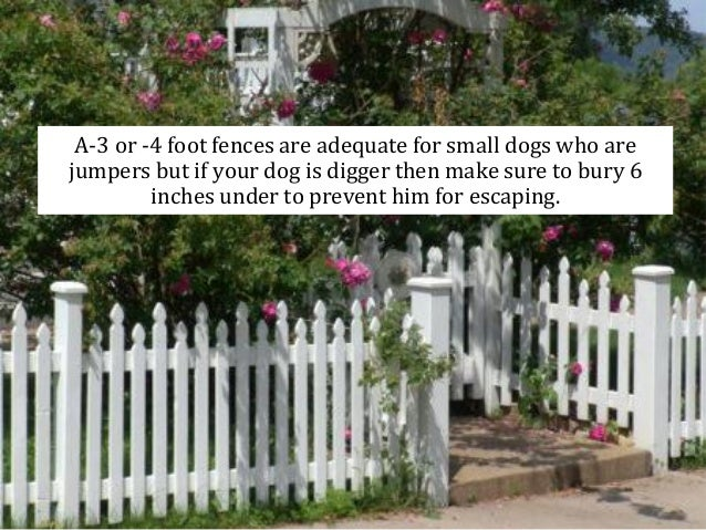 Protecting Your Pets :  23. A 3 Or  4 Foot Fences ...