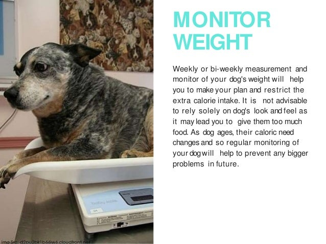 Tips on how to help your dog lose weight