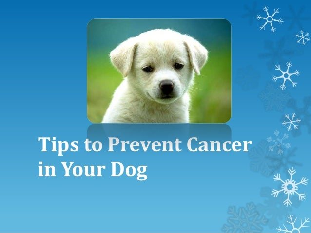 Tips to Prevent Cancerin Your Dog