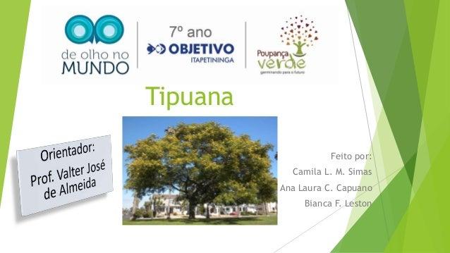 Tipuana Feito por: Camila L. M. Simas Ana Laura C. Capuano Bianca F. Leston