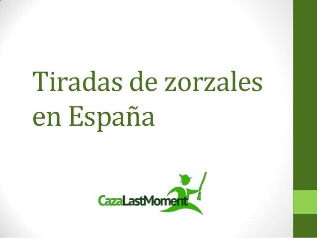 Tiradas de zorzales en España
