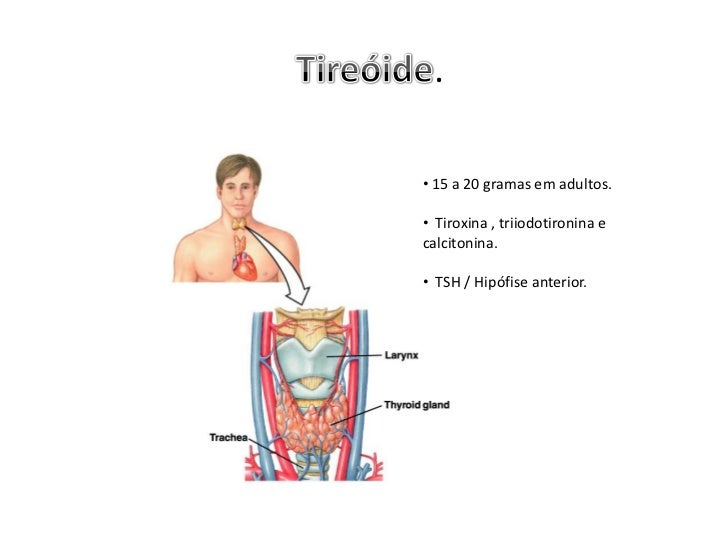 .• 15 a 20 gramas em adultos.• Tiroxina , triiodotironina ecalcitonina.• TSH / Hipófise anterior.