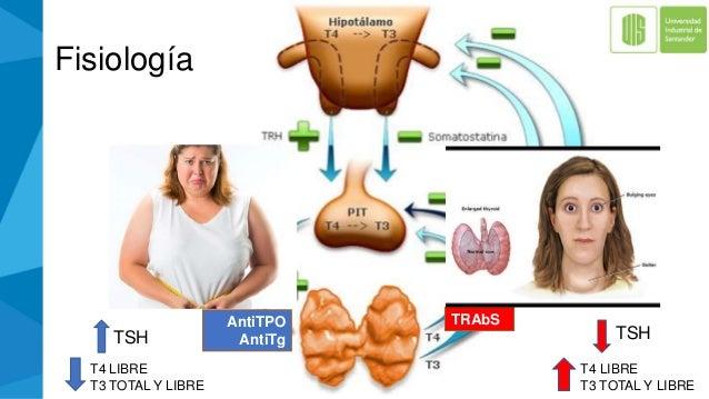 Fisiología TRAbSAntiTPO AntiTg T4 LIBRE T3 TOTAL Y LIBRE TSH T4 LIBRE T3 TOTAL Y LIBRE TSH
