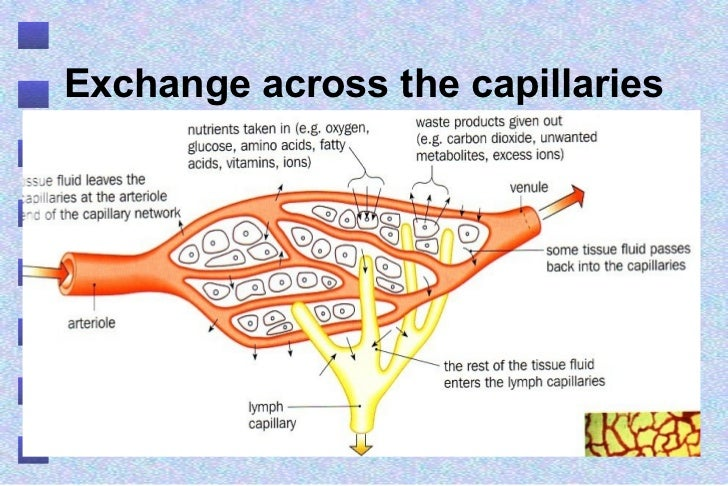 Tissue Fluid And Lymph