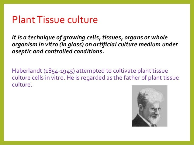 Phd thesis on plant tissue culture