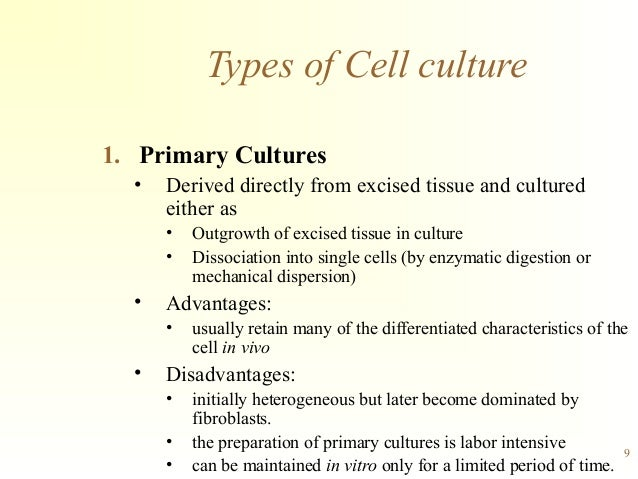 primary tissue culture A cell line derived directly from the parent tissue cells in primary culture have the same karyotype and chromosome number as those in the original tissue.