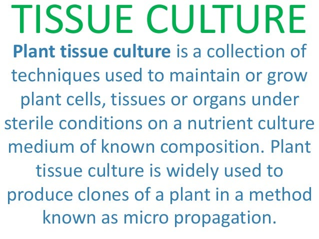 Ppt – plant tissue culture powerpoint presentation | free to.