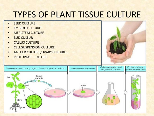 Plant Tissue Culture Technique and its applications