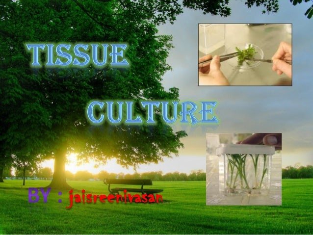 Tissue culture is the growth of tissues and cells separate from the organism. This is typically facilitated via use of a l...