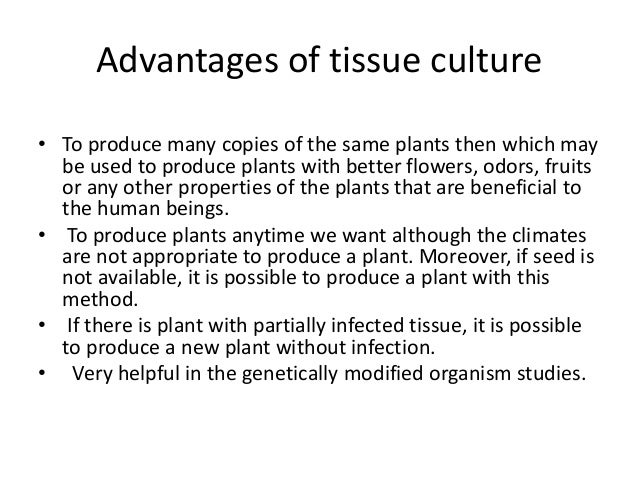 what are the advantages and disadvantages of tissue culture The social advantages are that we could: grow a large number of plants during a  short period of time this would make them stronger than ever and plants would.