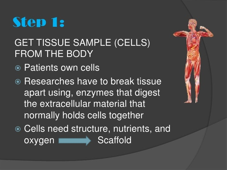 Step 1:GET TISSUE SAMPLE (CELLS)FROM THE BODY Patients own cells Researches have to break tissue  apart using, enzymes t...