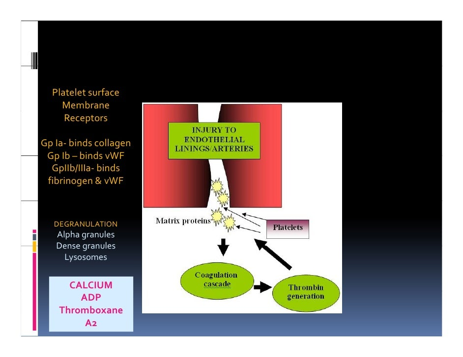 Tissue Infarction And Repair - Year 2