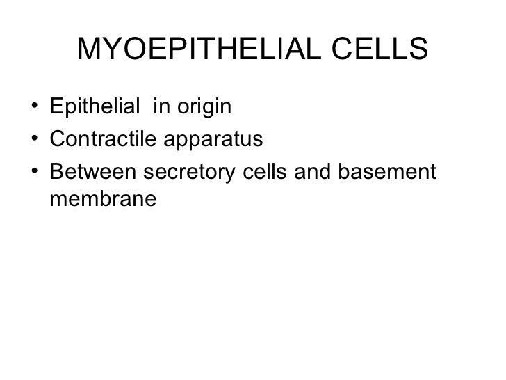 MYOEPITHELIAL CELLS• Epithelial in origin• Contractile apparatus• Between secretory cells and basement  membrane