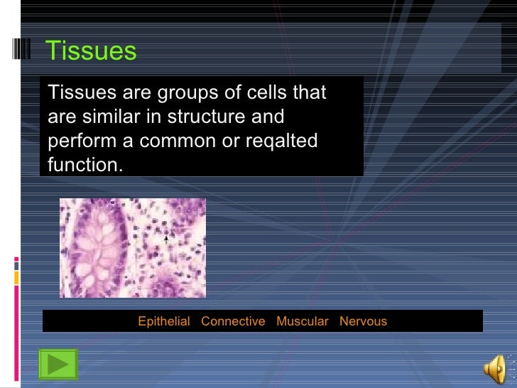 Tissues <ul><li>T issues are groups of cells that are similar in structure and perform a common or reqalted function.  </l...