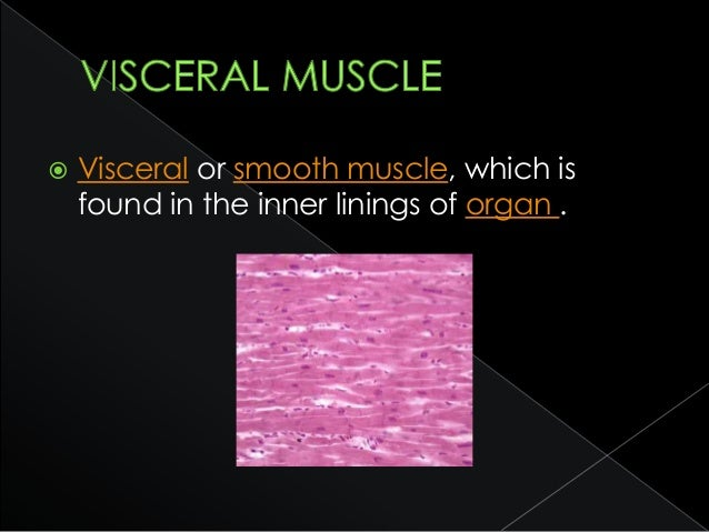  The epithelial tissues are formed by cells that cover the organ surfaces such as the surface of the skin, the airways, t...
