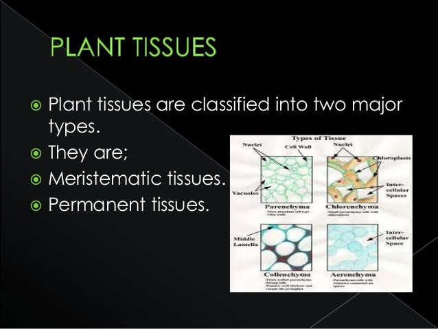  These tissues are called simple because they are composed of similar types of cells which have common origin and functio...