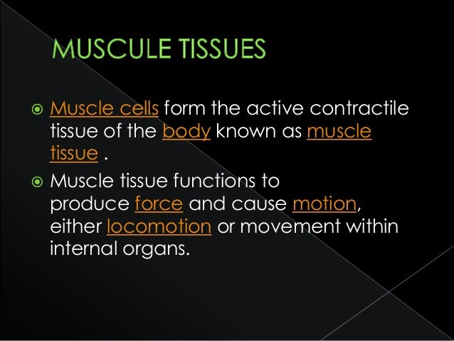  cardiac muscle which is found in the heart, allowing it to contract and pump blood throughout an organism.