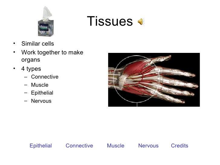 Tissues <ul><li>Similar cells </li></ul><ul><li>Work together to make organs </li></ul><ul><li>4 types </li></ul><ul><ul><...