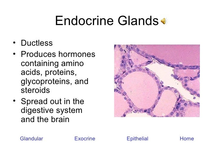 Endocrine Glands <ul><li>Ductless </li></ul><ul><li>Produces hormones containing amino acids, proteins, glycoproteins, and...
