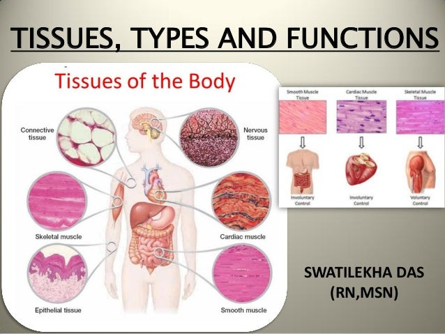 Tissues, types and functions(Anatomy)- Easy explanationSlideShare
