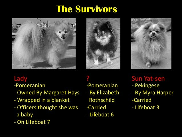 Name For A Dog That Survived