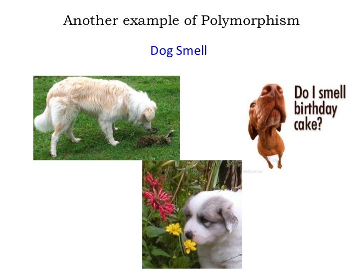 polymorphism in the c programming language essay Essay on upskilled: programming language and information technology certificate  programming language essay  encapsulation inheritance polymorphism .