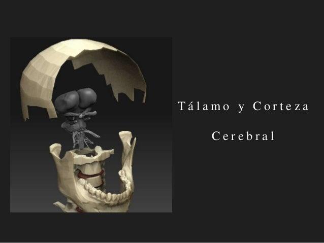 Tálamo y Corteza Cerebral