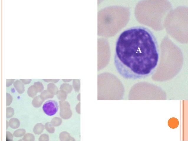 tlc cells