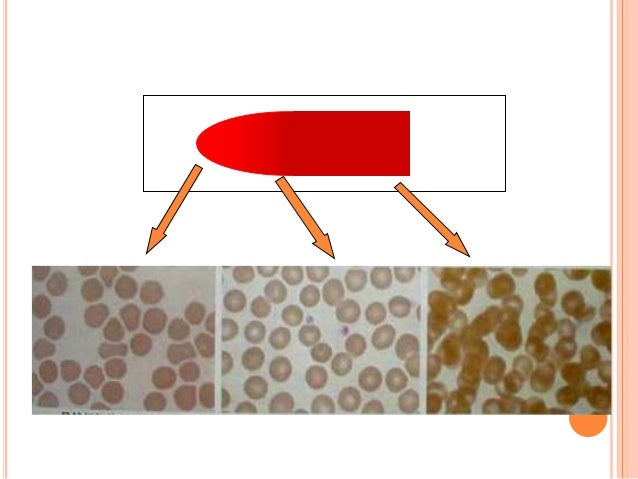 PRINCIPLE  White Blood Cells 1. Check for even distribution and estimate the number present (also, look for any gross abn...