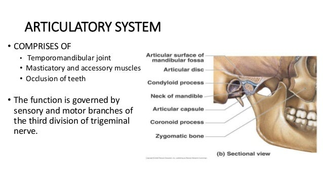 Tmj Anatomy Disorders