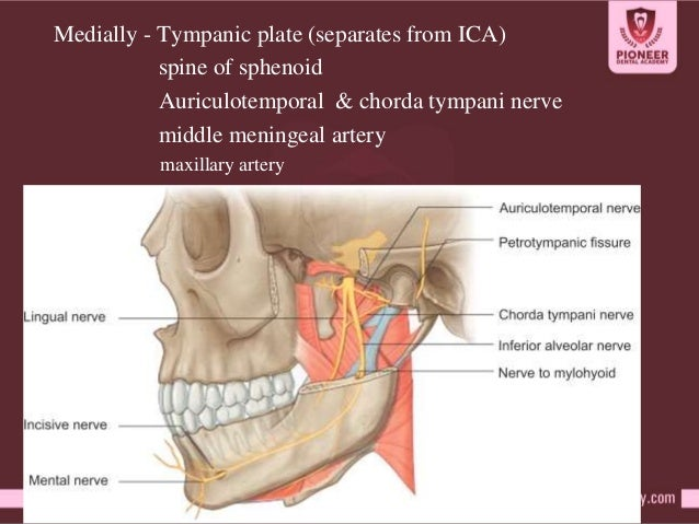tmj ppt by dr.nasser, Human Body