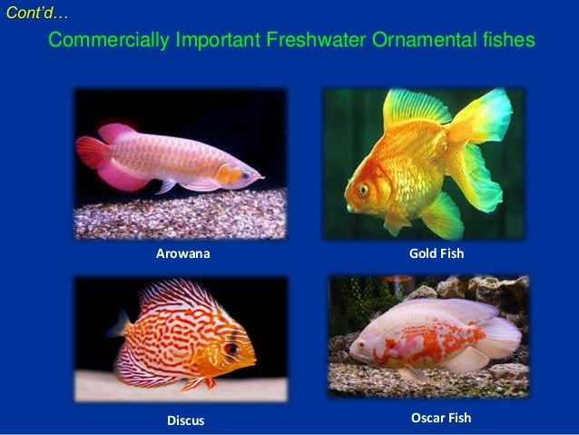 ornamental fish production We promote and support fish farming and aquaculture development in colorado and elsewhere.