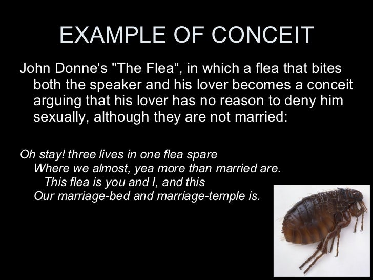 exploring the metaphors in john donnes poem the flea John donne poetry embraces a wide range of exploring the significance of the main symbols and poem--including donne's the flea and.